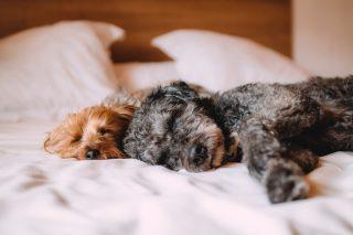 Att tänka på när du reser med hund – vaccinationer, packning och hundvänliga hotell